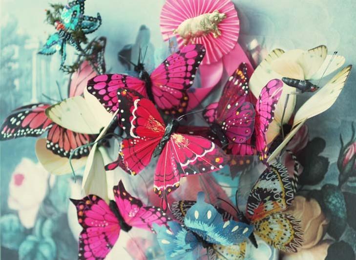 Butterflies_blog_instagram